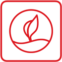 Icon Entwicklung